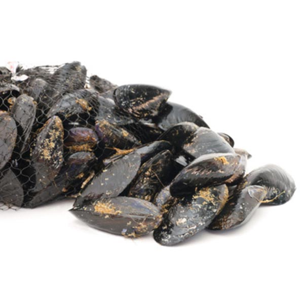 SPANISH MUSSELS 3KG